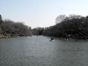 井の頭公園-1