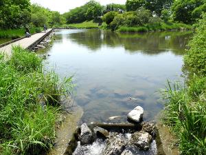 柳瀬川-4