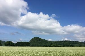 そば畑-2