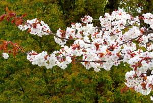 春の花-1