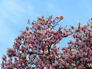 春の花-6